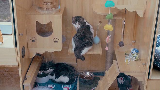 Cảm động với ngôi nhà thông minh cho mèo hoang ở Trung Quốc: Làm thủ công, trí tuệ nhân tạo xịn hơn người - Ảnh 6.