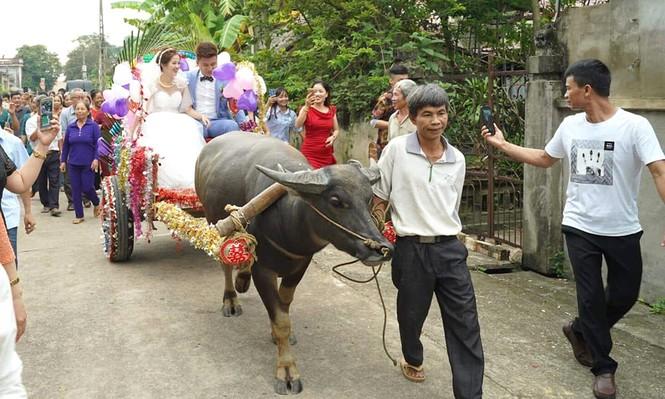Dân mạng thích thú xem cặp đôi xứ Thanh rước dâu bằng xe trâu  - ảnh 5